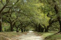 Orton Pathway