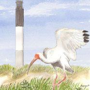 Oak Island Ibis