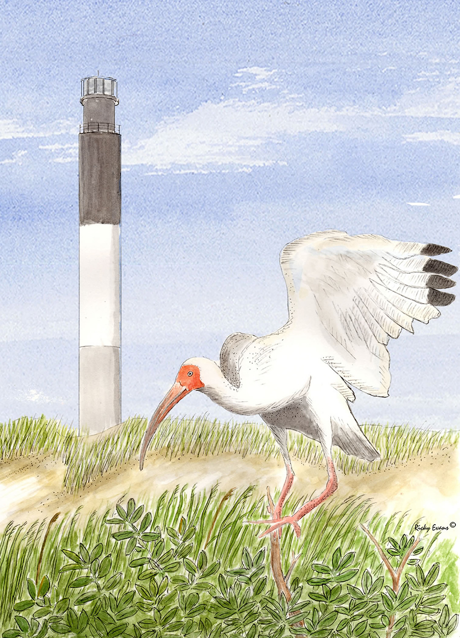 Oak Island Ibis painting by Ricky Evans